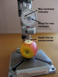 measuring fruit