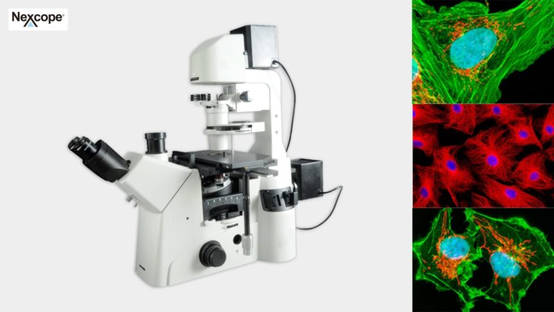 NIB900 Scientific Research Inverted Microscope